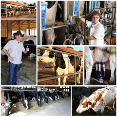 Dairy Farm - Collage
