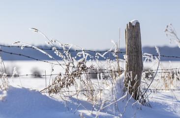 Frostiger Winterzaun