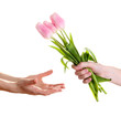 Mans hand giving woman's hand a flower bouquet with tulips,