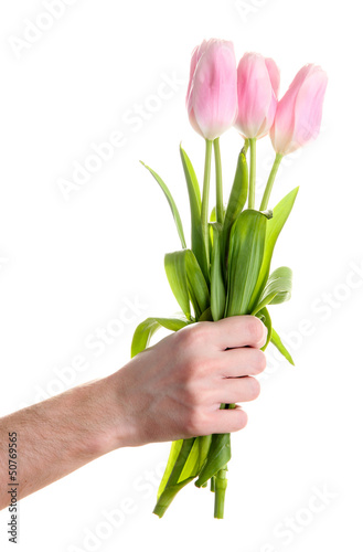 Beautiful bouquet of pink tulips in man hand, isolated on white