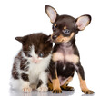 sad kitten and smiling dog. Isolated on a white