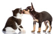 dog kisses a kitten. Isolated on a white