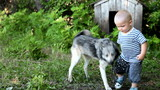 child playing with east siberian laika in the yard