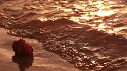 Sea shell at sunset
