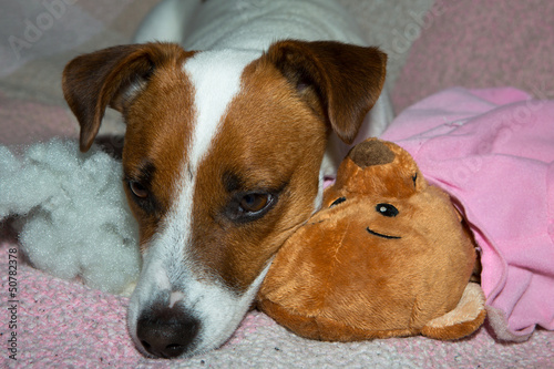 Hund mit Kuscheltier