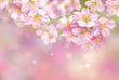 Vector of spring blossoming tree on pink bokeh background.