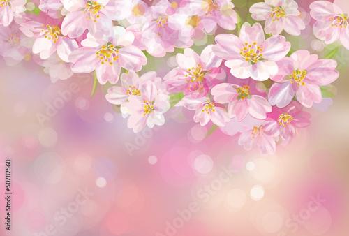 Fototapeten,blume,frühling,hintergrund,floral