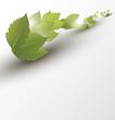 Spring - fresh green leaf. Vector illustration