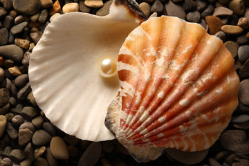 White pearl in seashell on pebbles
