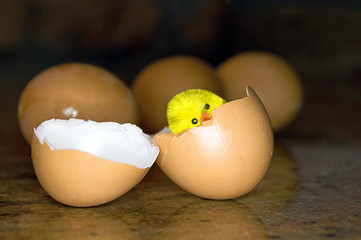 egg, and broken shells of eggs with chicken