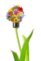 bulb from flowers isolated