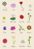 herbal book page, floral vector concept