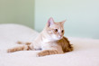 Young Cat in the bed