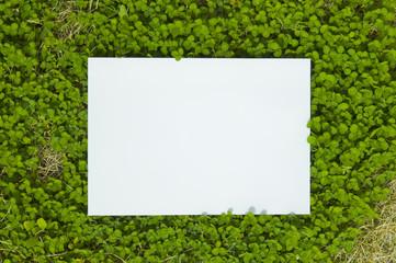 paper_clover_002