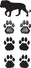 Genuine Lion track or footprint