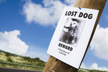Lost dog poster nailed to a lightpost