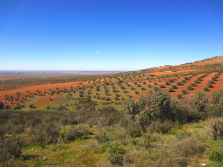 paisaje manchego con olivos Castillo la Mancha