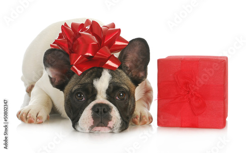 dog and present