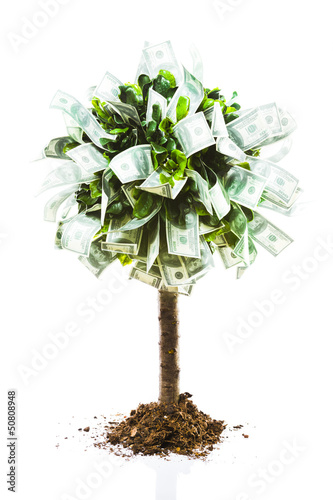concept, money tree on grass isolated
