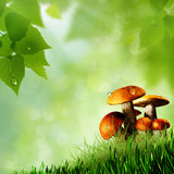 Mushrooms. Abstract natural backgrounds poster