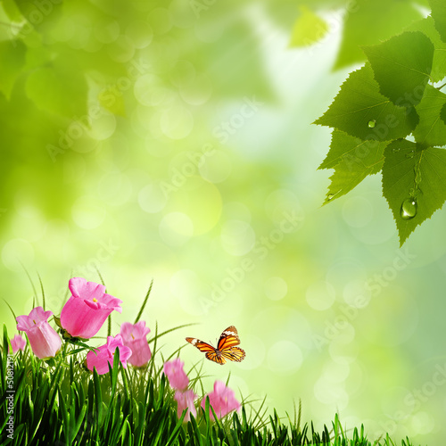 Beauty flowers. Abstract natural backgrounds