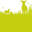 Grashalme und Schafe