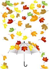 Chute de feuilles - parapluie - automne