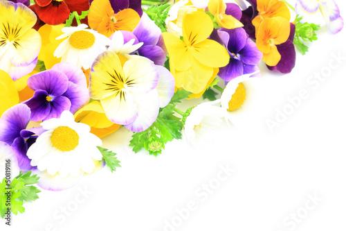 Foto op Canvas Pansies flower