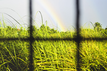 Rainbow and Grass
