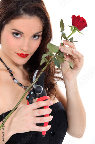 Woman pruning red rose