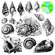 Seashells - 50823752