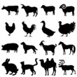 Farm animals vector illustrations