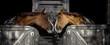 Leinwanddruck Bild - Horses in love