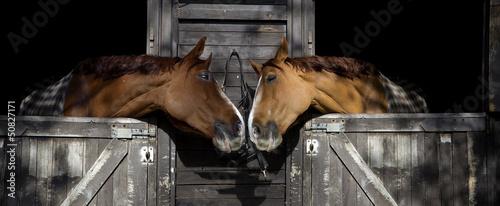 Leinwanddruck Bild Horses in love