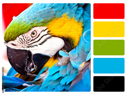 Parrot bird colour palette swatch