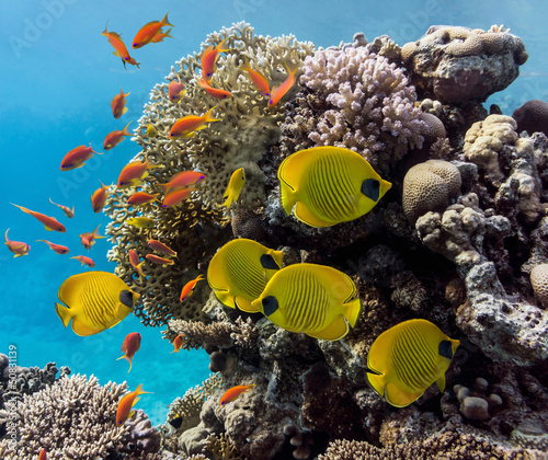 scena-koralowa-panorama