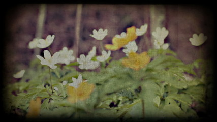 Spring wild flowers in forest, vintage styled timelapse. 1080p.