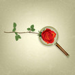 abstract floral background with Magnifying glass and rose
