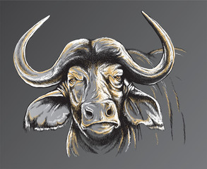 Sketch of an African Buffalo's face