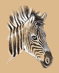 Sketch of a baby Zebra's face