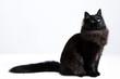 gatto nero 2