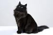 gatto nero 3