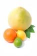 zitrusfrüchten