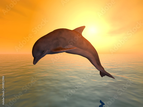 Papiers peints Dauphins Jumping Dolphin