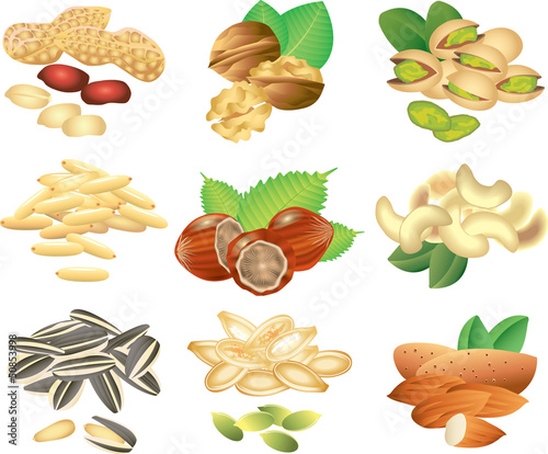 nuts and seeds photo-realistic vector set