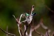 oiseau colibri dans son nid