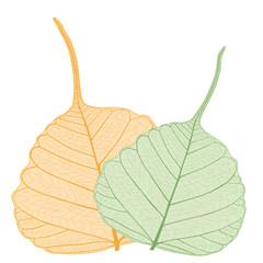 Schleierblätter, leaves
