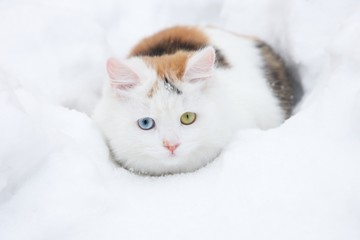 Beauty cat and snow