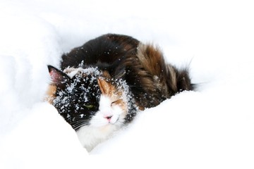 Dark cat in a snowdrift
