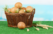 Eggs in basket on grass on blue natural background